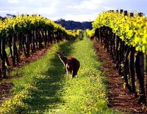 vins australiens