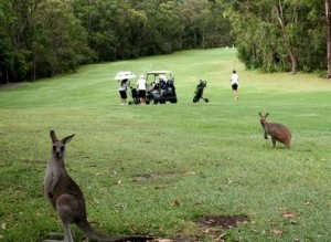 Golf_Nelson_Bay_Golf_Club-Port Stephens
